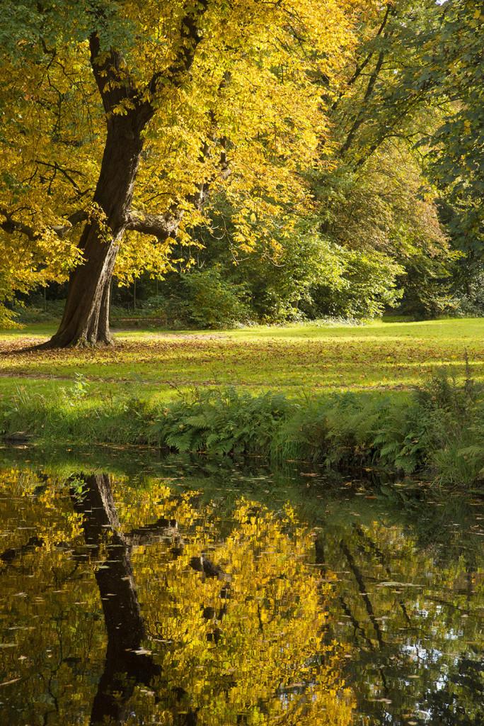 Herfstbomen spiegelen in het water tijdens de Workshop Herfstfotografie