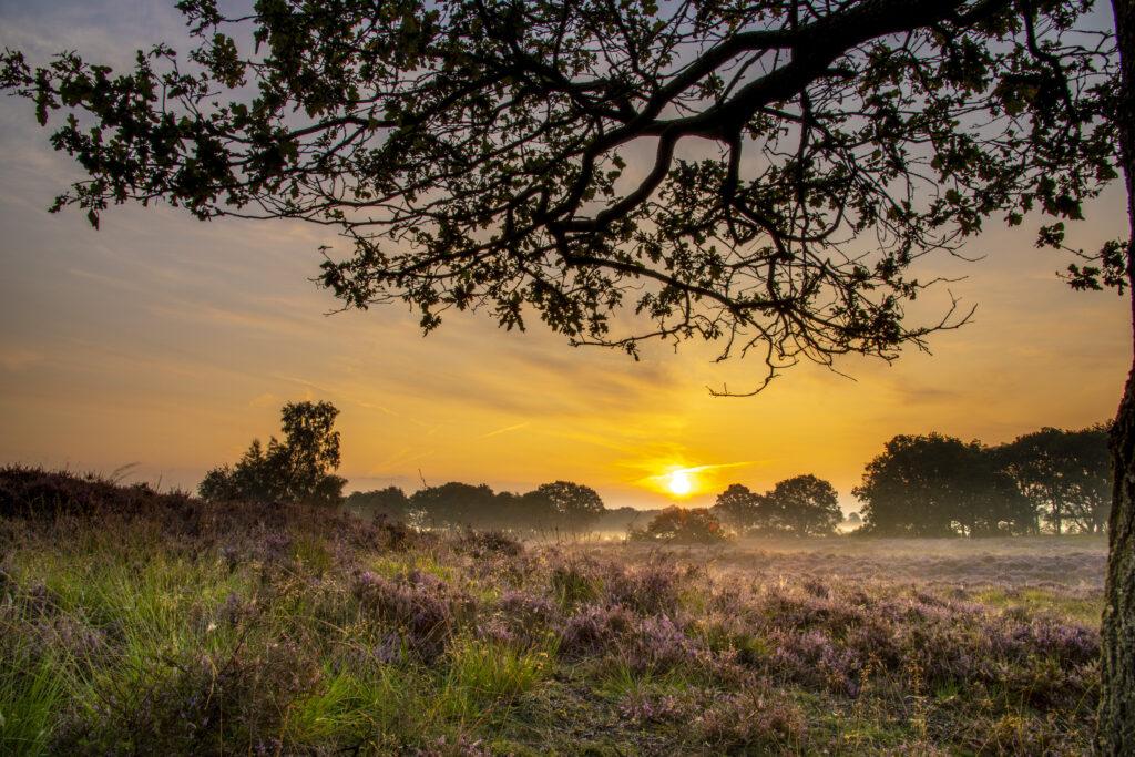Gasterse duinen in de ochtendzon Fotoweekend Drenthe