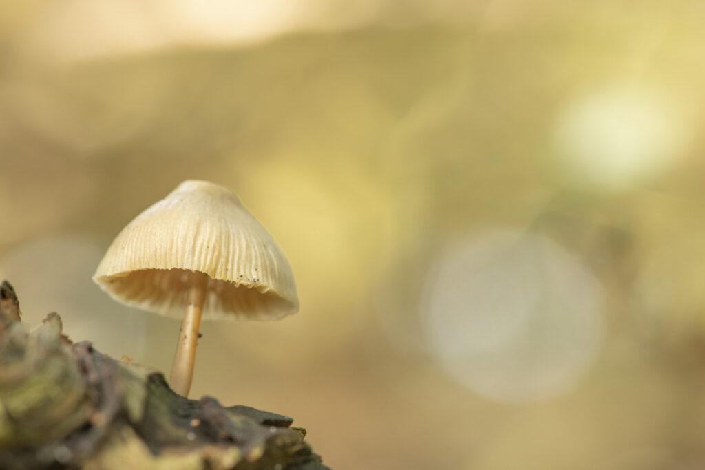 Workshop paddenstoelen fotograferen 2